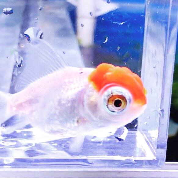 ◇『sakanaの日常』謹賀新年!!近々は海水魚の移動や魚を数えます・・・。