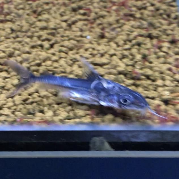 ◇『sakanaの日常』迷子の熱帯魚・・・どこにいますか。