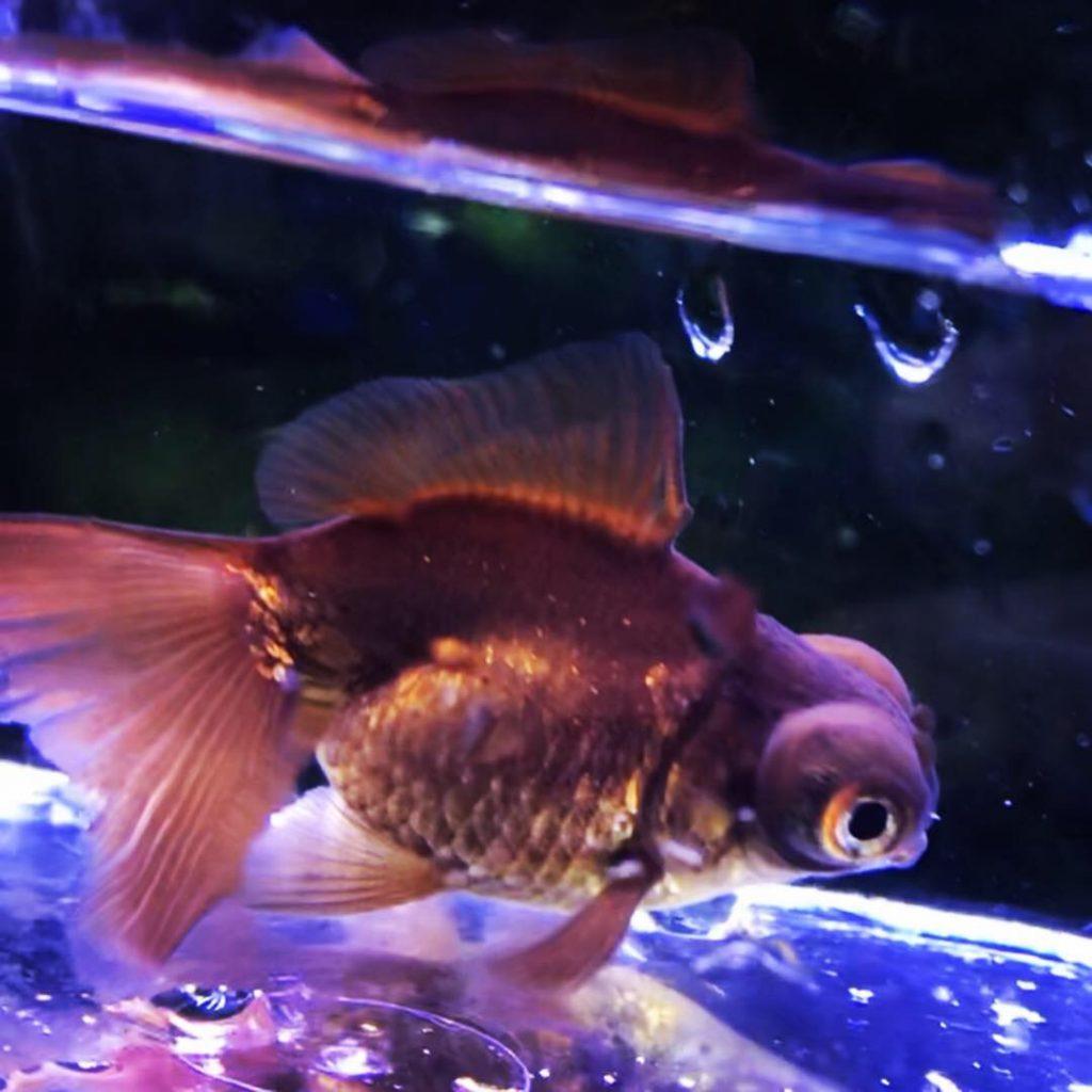 ◇『sakanaの日常』この魚には、ゴハン(エサ)何を与えていますか?