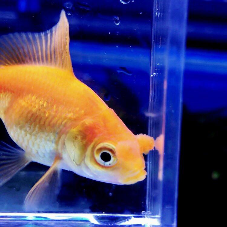 ◇『sakanaの日常』経口投与する魚病薬