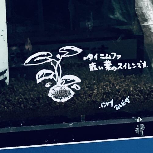 ◇『sakanaの日常』球根を持つ水草は、腐敗に注意する