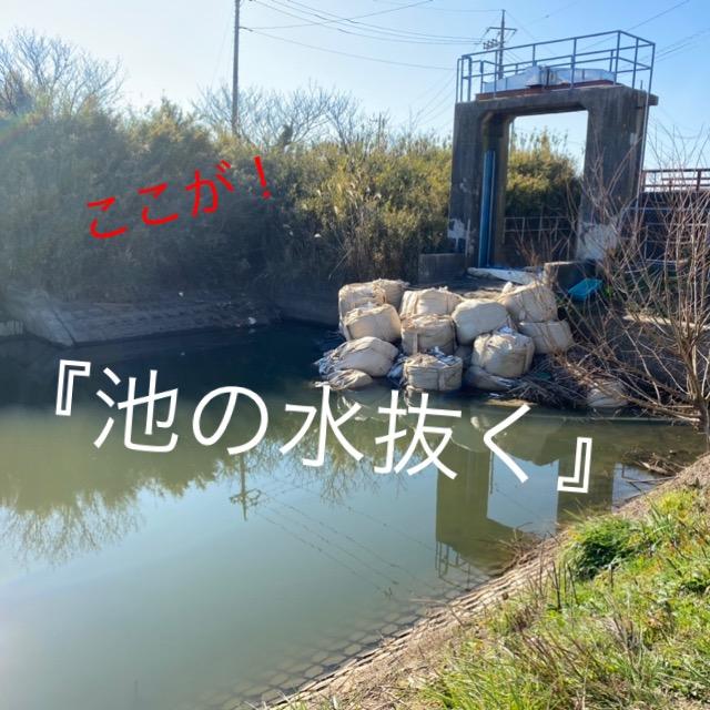 ◆『緊急SOS!池の水ぜんぶ抜く大作戦』で紹介された魚の飼育販売状況とは。ハクレン、ライギョ、コイ、ヘラブナ、ツチフキ、タウナギなど茨城県潮来のアクアリウムとは。
