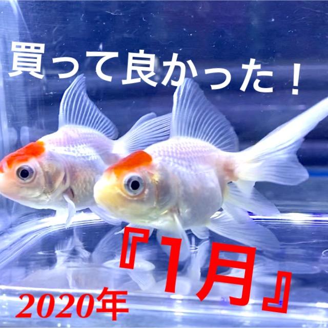 ◆2020年『1月』の買って良かったお魚の『ベスト5』ご紹介!!