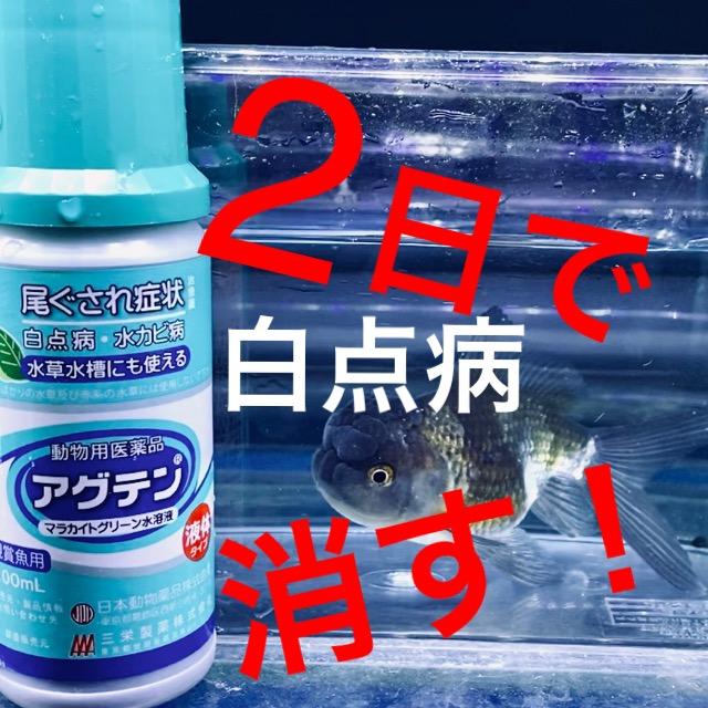 ◆『2日で白点病を消す』方法。そのまま治せる簡単治療法と、注意する落とし穴とは。