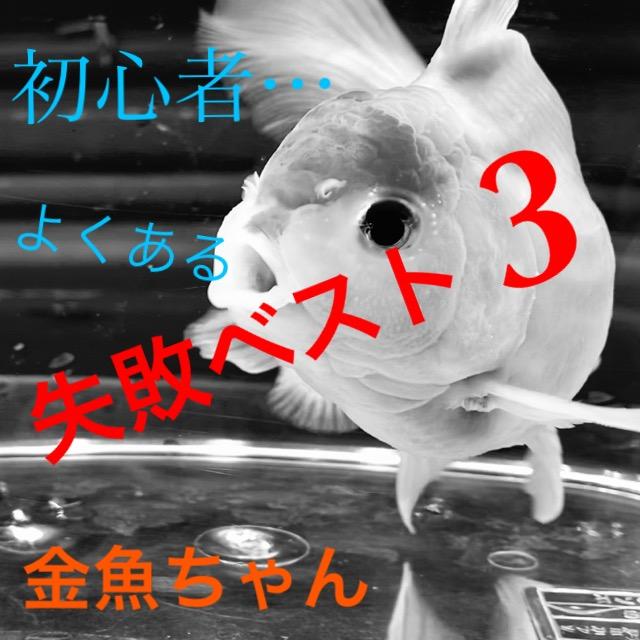 ◆ぜったいに気をつけたい初心者の金魚飼育失敗ベスト3