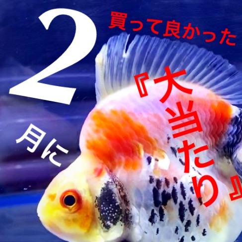 ◆2020年2月の良かった!気になった!【金魚・熱帯魚・水草・病気】