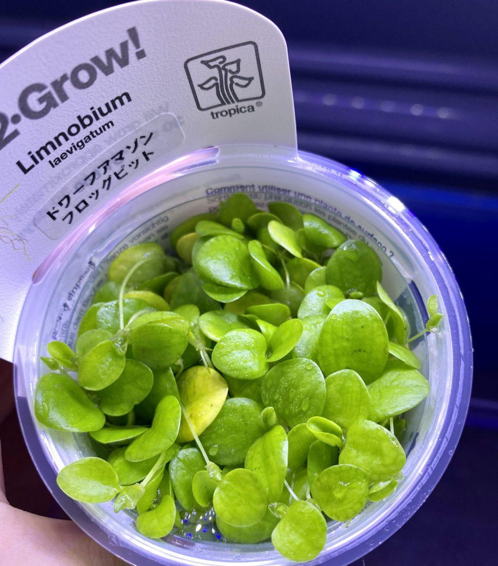 【水草】アマゾンブロックピットは組織培養必要なのか?通販を含めた販売や価格帯とは【トロピカ社】1-2-Grow