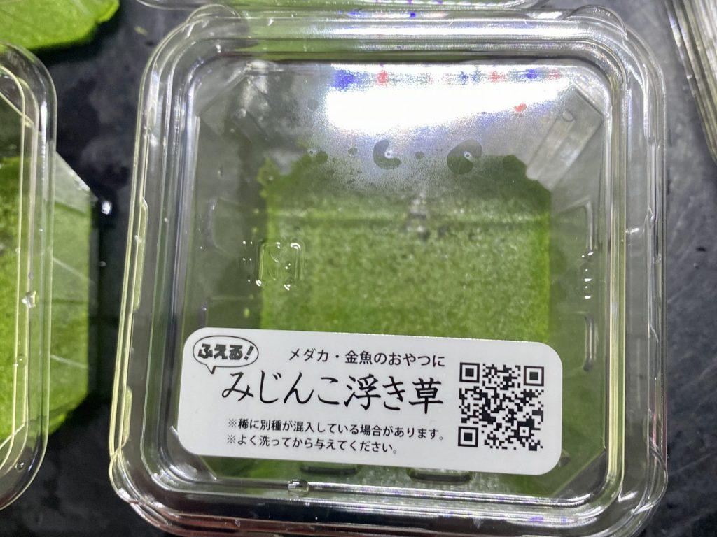 みじんこ浮き草(仁丹藻)はメダカのために?通販を含めた販売や価格帯とは【水草・ミジンコウキクサ】