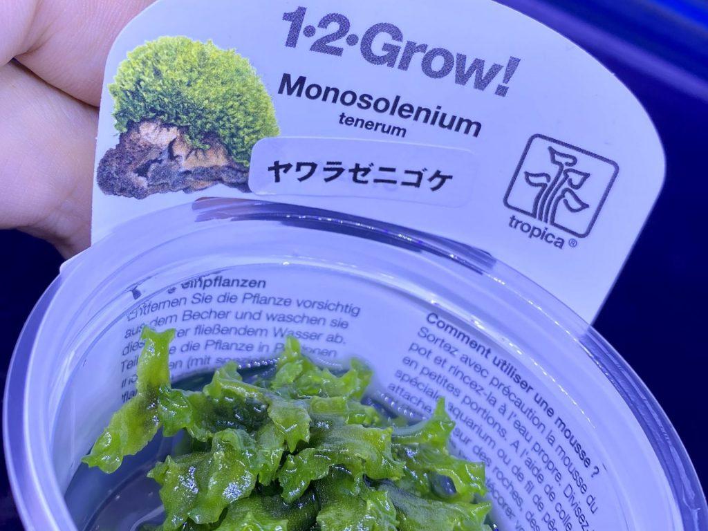 【水草・モス】ヤワラゼニゴケの育て方や通販を含めた販売や価格帯とは【トロピカ社1-2-Grow 】Monosolenium tenerum