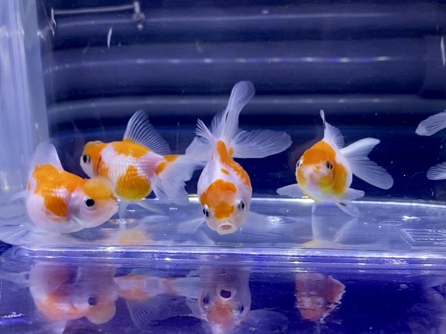 ◆金魚水槽から熱帯魚水槽へ上手に変更する方法とは